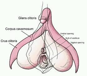 klitoris+cewek